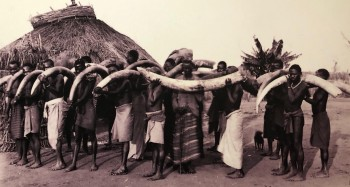 Porters with ivory tusks. UNESCO Slavery exhibition, Zanzibar.